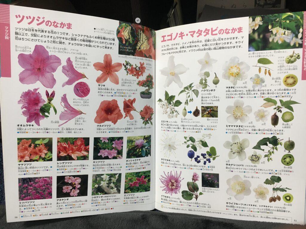 小学館の図鑑(花)